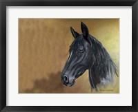 Framed Black Horse Portrait