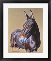 Framed Clamity Jane Mule