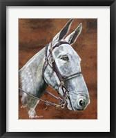 Framed Molly Mule