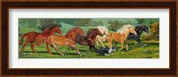 Framed Running Horses With Border Collie