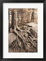 Framed Strong Roots