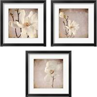 Framed Paper Magnolia 3 Piece Framed Art Print Set