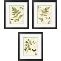 Framed Ivies and Ferns 3 Piece Framed Art Print Set