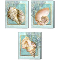 Framed Shells and Coral 3 Piece Canvas Print Set