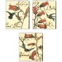 Framed Small Hummingbird Reverie 3 Piece Canvas Print Set