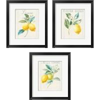Framed Floursack Lemon 3 Piece Framed Art Print Set
