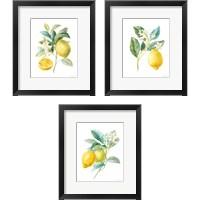 Framed Floursack Lemon on White 3 Piece Framed Art Print Set