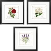 Framed Floral 3 Piece Framed Art Print Set