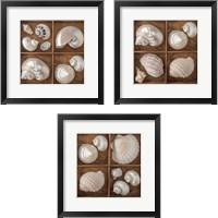 Framed Seashells Treasures 3 Piece Framed Art Print Set