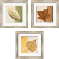 Framed Leaf Impression 3 Piece Framed Art Print Set