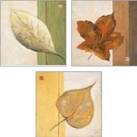Framed Leaf Impression 3 Piece Art Print Set