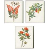 Framed Botanical of the Tropics 3 Piece Canvas Print Set