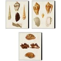 Framed Knorr Shells 3 Piece Canvas Print Set