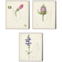 Framed Watercolor Botanical Sketches 3 Piece Canvas Print Set