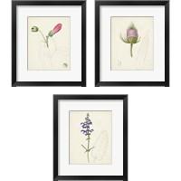 Framed Watercolor Botanical Sketches 3 Piece Framed Art Print Set