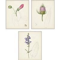 Framed Watercolor Botanical Sketches 3 Piece Art Print Set