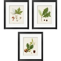 Framed Antique Tree Study 3 Piece Framed Art Print Set