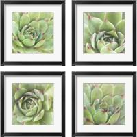 Framed Garden Succulents 4 Piece Framed Art Print Set