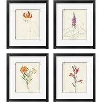 Framed Watercolor Botanical Sketches 4 Piece Framed Art Print Set