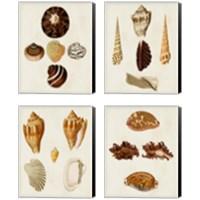 Framed Knorr Shells 4 Piece Canvas Print Set
