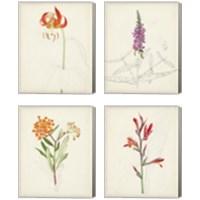Framed Watercolor Botanical Sketches 4 Piece Canvas Print Set