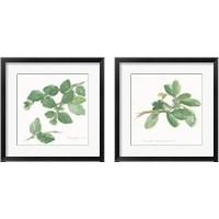 Framed Herbs on White 2 Piece Framed Art Print Set