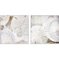 Framed White Shells 2 Piece Art Print Set