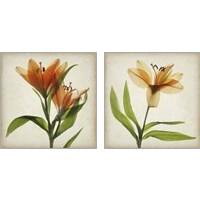 Framed Parchment Flowers 2 Piece Art Print Set