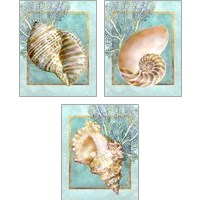 Framed Conch Shell and Coral 3 Piece Art Print Set