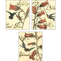 Framed Small Hummingbird Reverie 3 Piece Art Print Set