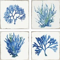 Framed Blue and Green Coral  4 Piece Art Print Set