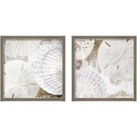 Framed White Shells 2 Piece Framed Art Print Set