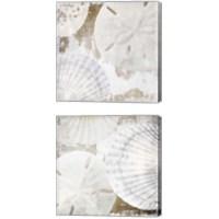 Framed White Shells 2 Piece Canvas Print Set