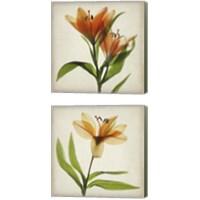 Framed Parchment Flowers 2 Piece Canvas Print Set