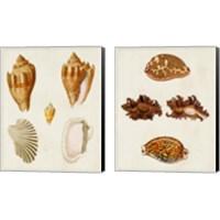 Framed Knorr Shells 2 Piece Canvas Print Set