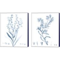 Framed Antique Botanical in Blue 2 Piece Canvas Print Set