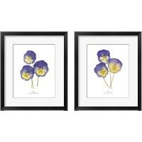 Framed Pressed Violas 2 Piece Framed Art Print Set