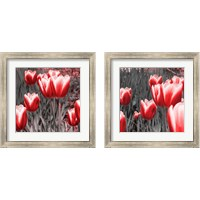 Framed Red Tulips 2 Piece Framed Art Print Set
