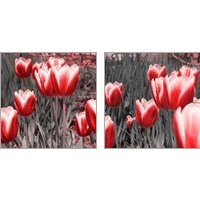 Framed Red Tulips 2 Piece Art Print Set