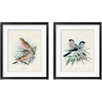 Framed Antique Birds 2 Piece Framed Art Print Set
