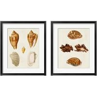 Framed Knorr Shells 2 Piece Framed Art Print Set