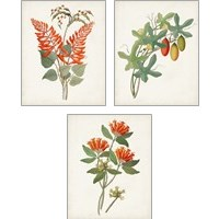 Framed Botanical of the Tropics 3 Piece Art Print Set