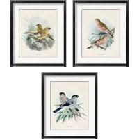 Framed Antique Birds 3 Piece Framed Art Print Set