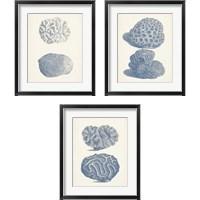 Framed Antique Coral Collection 3 Piece Framed Art Print Set