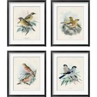 Framed Antique Birds 4 Piece Framed Art Print Set