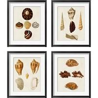 Framed Knorr Shells 4 Piece Framed Art Print Set