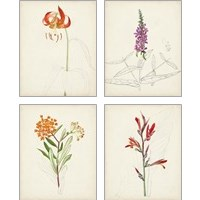 Framed Watercolor Botanical Sketches 4 Piece Art Print Set
