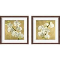 Framed Orchids on a Golden Background 2 Piece Framed Art Print Set