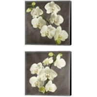 Framed Orchids on Grey Background 2 Piece Canvas Print Set