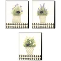 Framed Herb 3 Piece Canvas Print Set